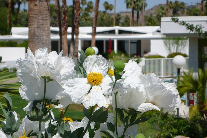 White Flowers and Home